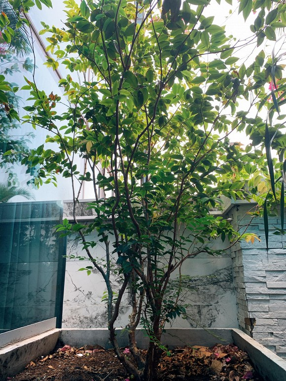 Khu vườn ngập tràn hoa và cây xanh trong căn villa trên không trị giá hơn 70 tỷ đồng của Nathan Lee-13
