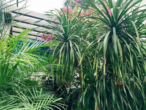 Khu vườn ngập tràn hoa và cây xanh trong căn villa trên không trị giá hơn 70 tỷ đồng của Nathan Lee-14