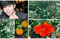 Khu vườn ngập tràn hoa và cây xanh trong căn villa trên không trị giá hơn 70 tỷ đồng của Nathan Lee