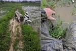Chú chó nổi lềnh phềnh trên sông khiến sen phát khóc, được cứu thì ton ton đứng dậy và bản mặt nhìn muốn... đánh-5