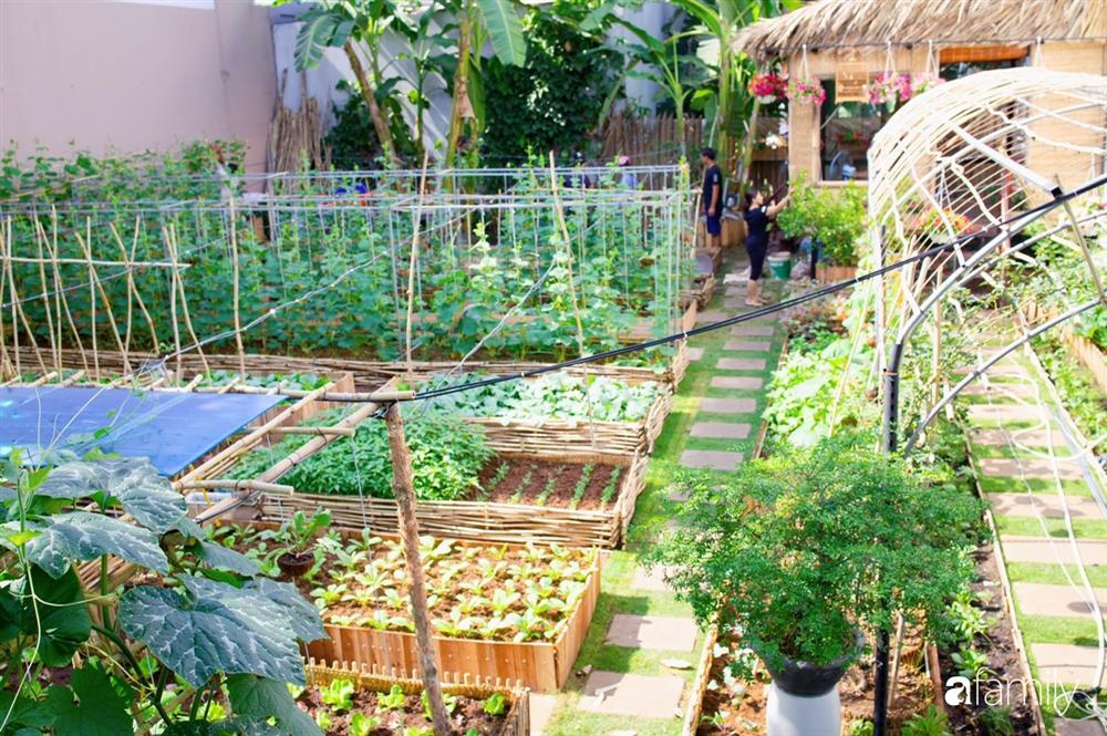 Nghỉ dịch ở nhà, gia đình trẻ gắn kết yêu thương bằng cách cải tạo vườn rau xanh tốt giữa lòng Sài Gòn-3