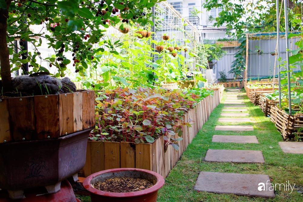 Nghỉ dịch ở nhà, gia đình trẻ gắn kết yêu thương bằng cách cải tạo vườn rau xanh tốt giữa lòng Sài Gòn-5