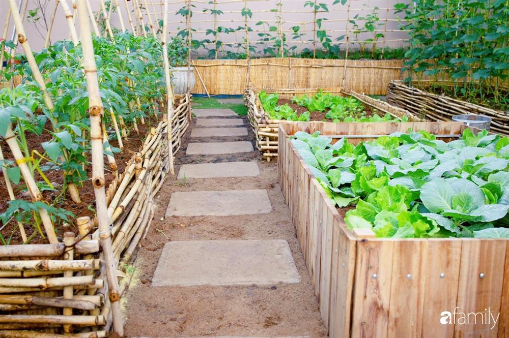 Nghỉ dịch ở nhà, gia đình trẻ gắn kết yêu thương bằng cách cải tạo vườn rau xanh tốt giữa lòng Sài Gòn-12