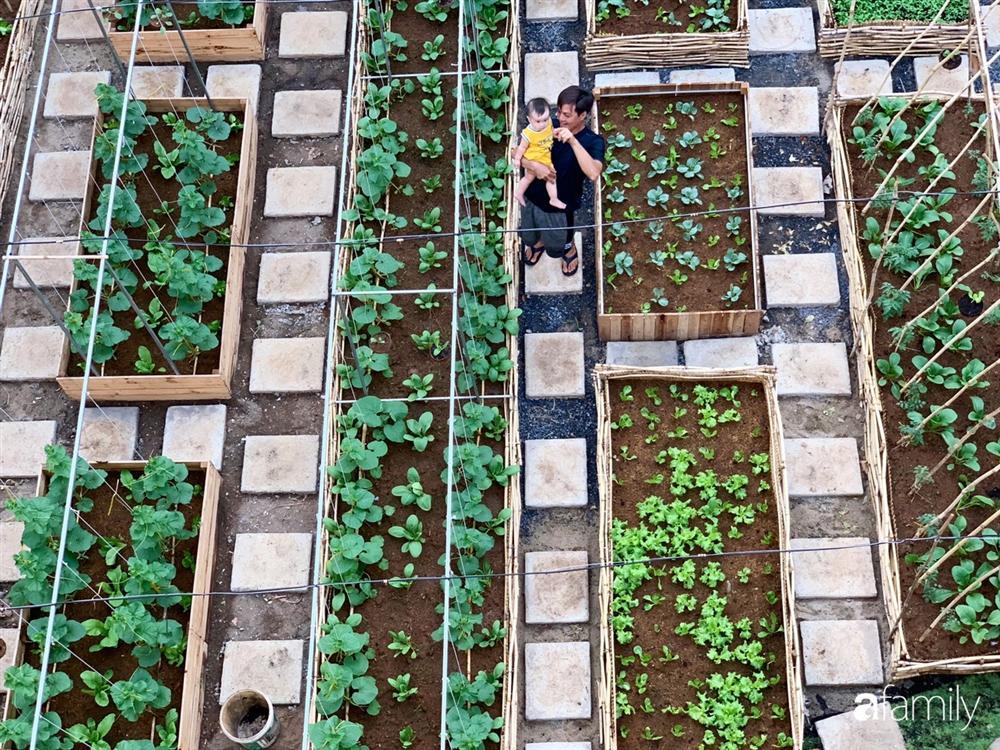 Nghỉ dịch ở nhà, gia đình trẻ gắn kết yêu thương bằng cách cải tạo vườn rau xanh tốt giữa lòng Sài Gòn-15