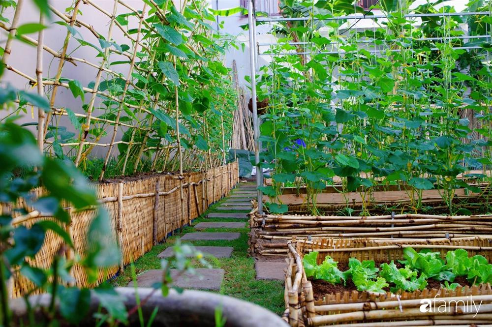 Nghỉ dịch ở nhà, gia đình trẻ gắn kết yêu thương bằng cách cải tạo vườn rau xanh tốt giữa lòng Sài Gòn-20