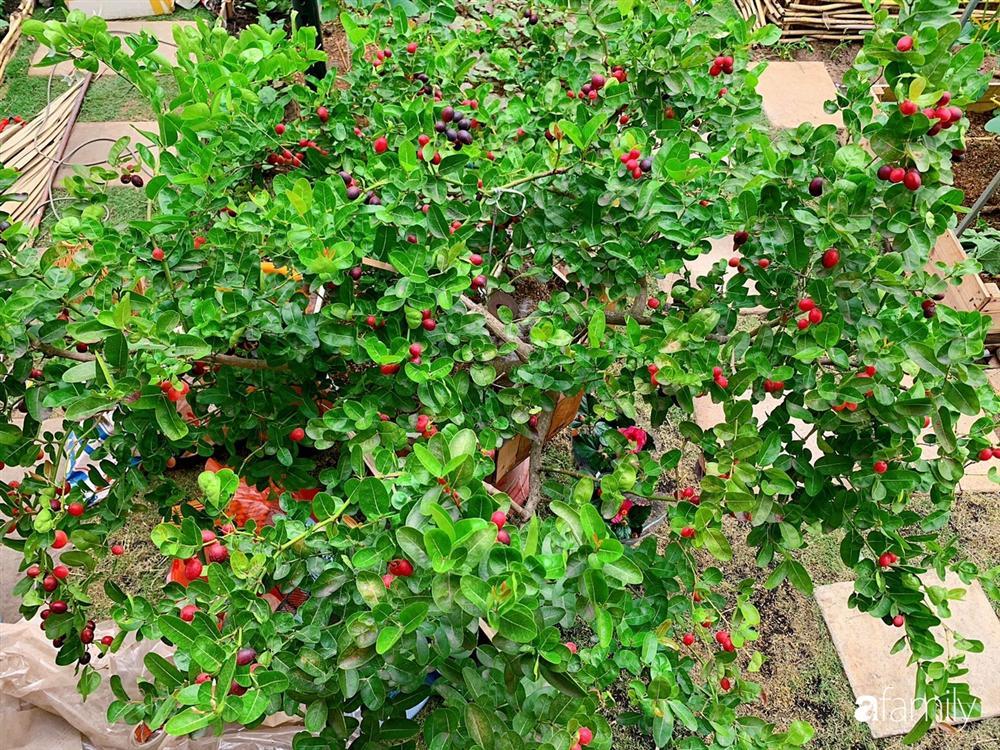 Nghỉ dịch ở nhà, gia đình trẻ gắn kết yêu thương bằng cách cải tạo vườn rau xanh tốt giữa lòng Sài Gòn-22