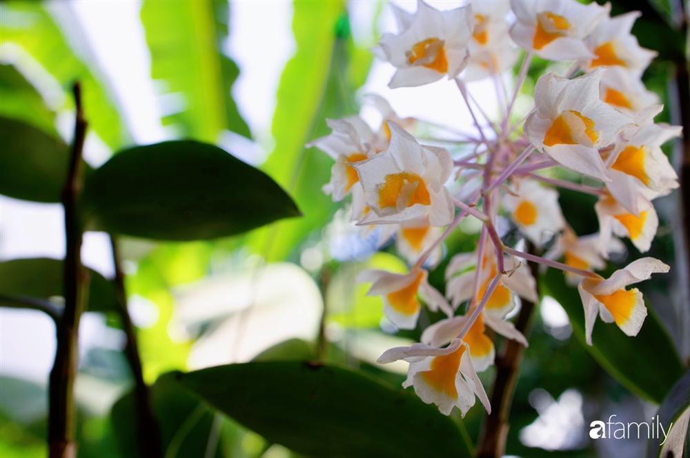 Nghỉ dịch ở nhà, gia đình trẻ gắn kết yêu thương bằng cách cải tạo vườn rau xanh tốt giữa lòng Sài Gòn-23