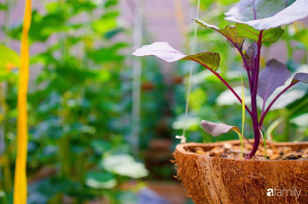 Nghỉ dịch ở nhà, gia đình trẻ gắn kết yêu thương bằng cách cải tạo vườn rau xanh tốt giữa lòng Sài Gòn-27