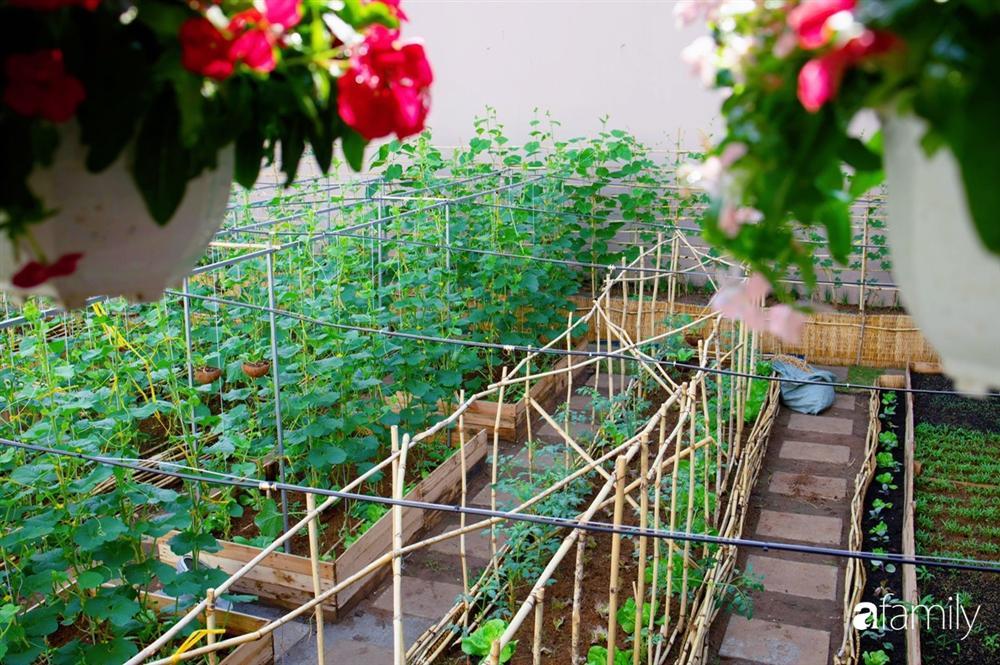 Nghỉ dịch ở nhà, gia đình trẻ gắn kết yêu thương bằng cách cải tạo vườn rau xanh tốt giữa lòng Sài Gòn-28
