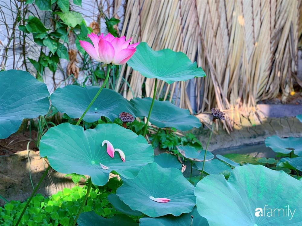 Nghỉ dịch ở nhà, gia đình trẻ gắn kết yêu thương bằng cách cải tạo vườn rau xanh tốt giữa lòng Sài Gòn-31