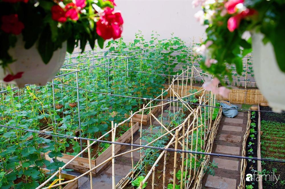 Nghỉ dịch ở nhà, gia đình trẻ gắn kết yêu thương bằng cách cải tạo vườn rau xanh tốt giữa lòng Sài Gòn-33