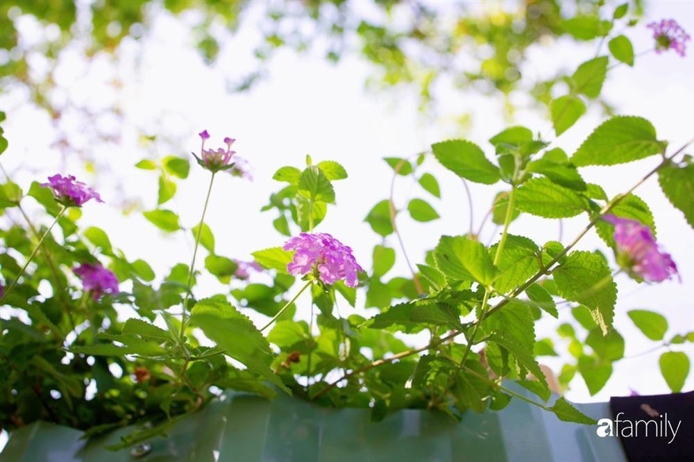 Nghỉ dịch ở nhà, gia đình trẻ gắn kết yêu thương bằng cách cải tạo vườn rau xanh tốt giữa lòng Sài Gòn-34