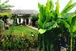 Bí quyết trộn đất giản đơn mà hiệu quả giúp khu vườn 70m² trồng cây gì cũng tốt tươi xanh mát của mẹ đảm ở Huế-39