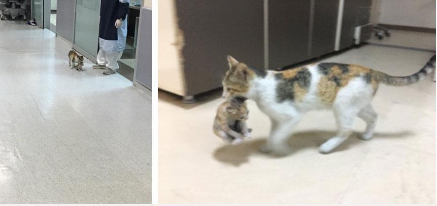 Mèo mẹ khiến dân mạng xúc động khi tự tha con ốm đến bệnh viện cầu cứu-1