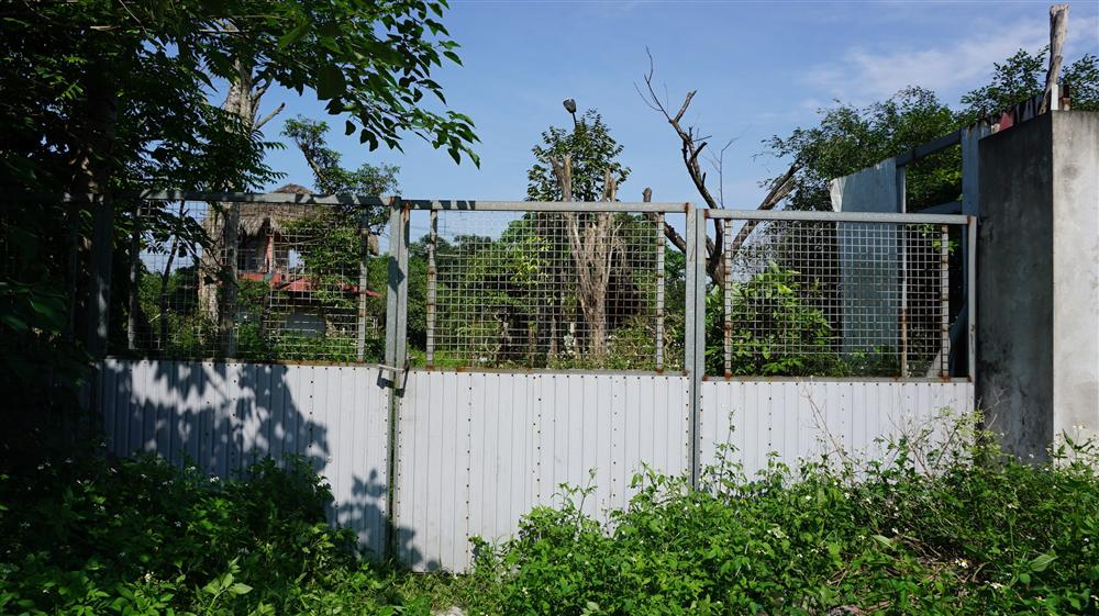 Khu vườn bỏ hoang toàn siêu cây bạc tỷ của đại gia nức tiếng một thời-1