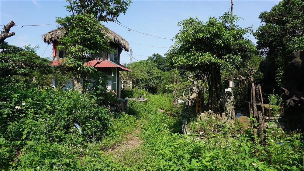 Khu vườn bỏ hoang toàn siêu cây bạc tỷ của đại gia nức tiếng một thời-2