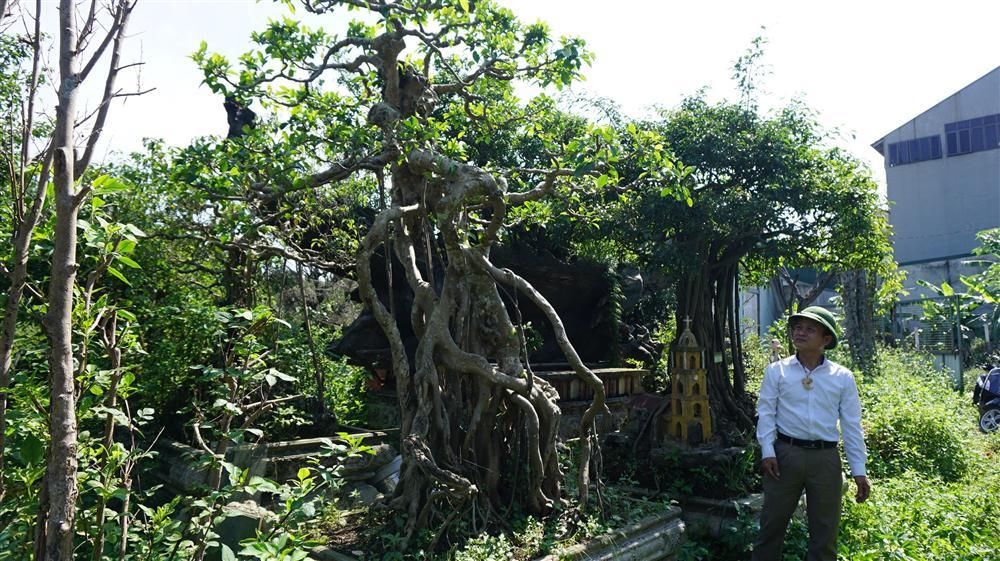 Khu vườn bỏ hoang toàn siêu cây bạc tỷ của đại gia nức tiếng một thời-11