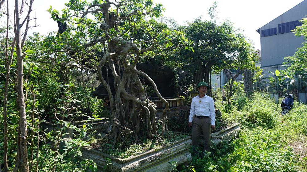 Khu vườn bỏ hoang toàn siêu cây bạc tỷ của đại gia nức tiếng một thời-13