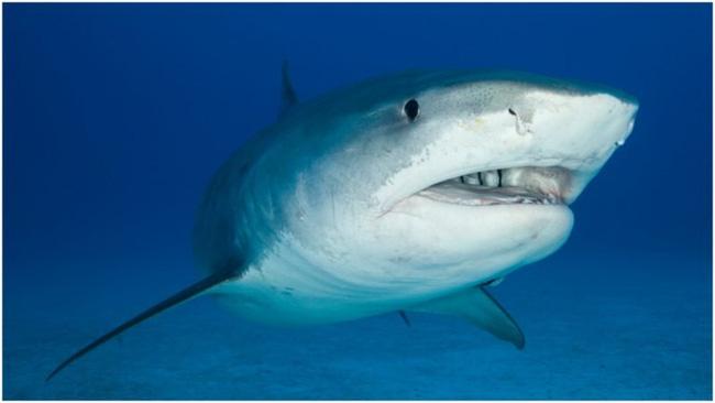 Con cá mập trong thủy cung bất ngờ nôn ra cánh tay người khiến khách tham quan hoảng loạn mở ra vụ án mạng bí ẩn nhất nước Úc-1