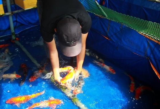 Thanh niên khởi nghiệp từ cá Koi, thu nửa tỷ mỗi năm-7