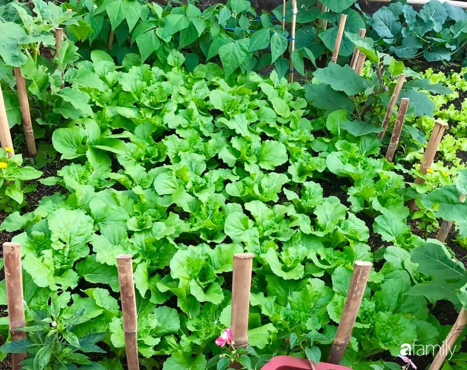 Bí quyết trộn đất giản đơn mà hiệu quả giúp khu vườn 70m² trồng cây gì cũng tốt tươi xanh mát của mẹ đảm ở Huế-1