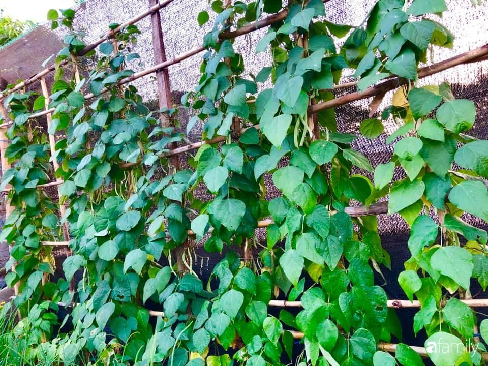 Bí quyết trộn đất giản đơn mà hiệu quả giúp khu vườn 70m² trồng cây gì cũng tốt tươi xanh mát của mẹ đảm ở Huế-2