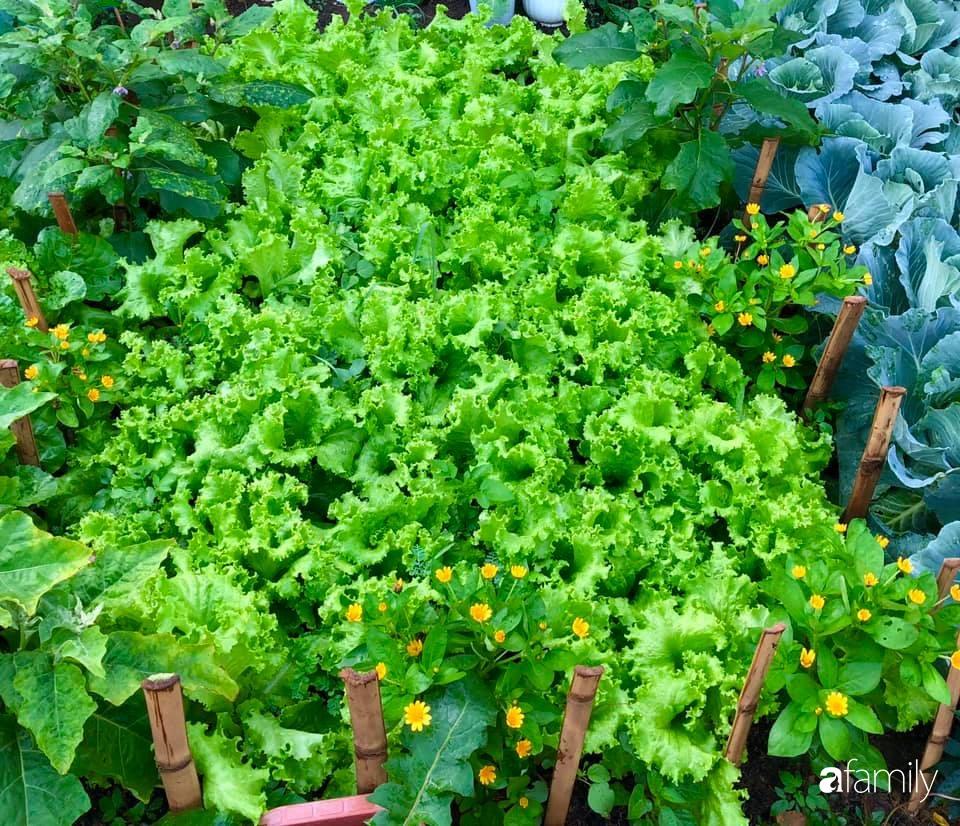 Bí quyết trộn đất giản đơn mà hiệu quả giúp khu vườn 70m² trồng cây gì cũng tốt tươi xanh mát của mẹ đảm ở Huế-3