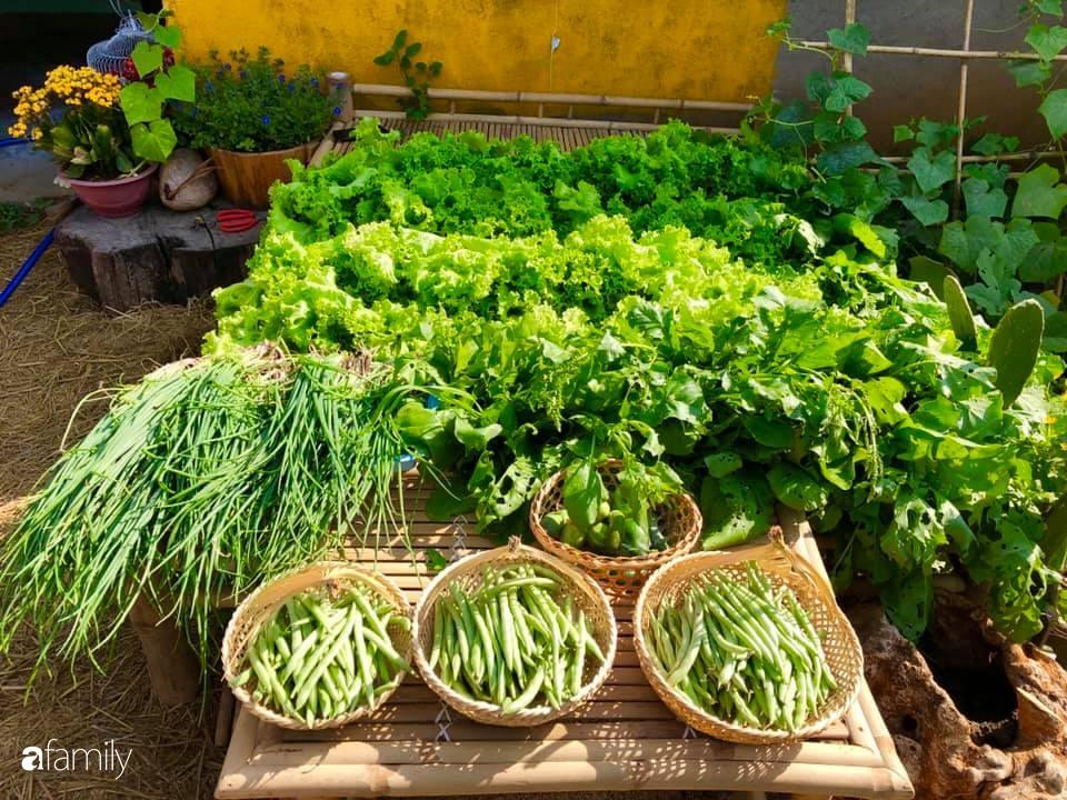 Bí quyết trộn đất giản đơn mà hiệu quả giúp khu vườn 70m² trồng cây gì cũng tốt tươi xanh mát của mẹ đảm ở Huế-4