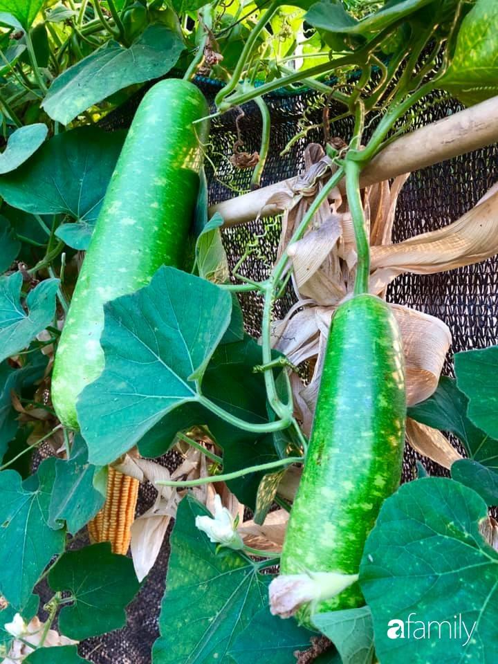 Bí quyết trộn đất giản đơn mà hiệu quả giúp khu vườn 70m² trồng cây gì cũng tốt tươi xanh mát của mẹ đảm ở Huế-7