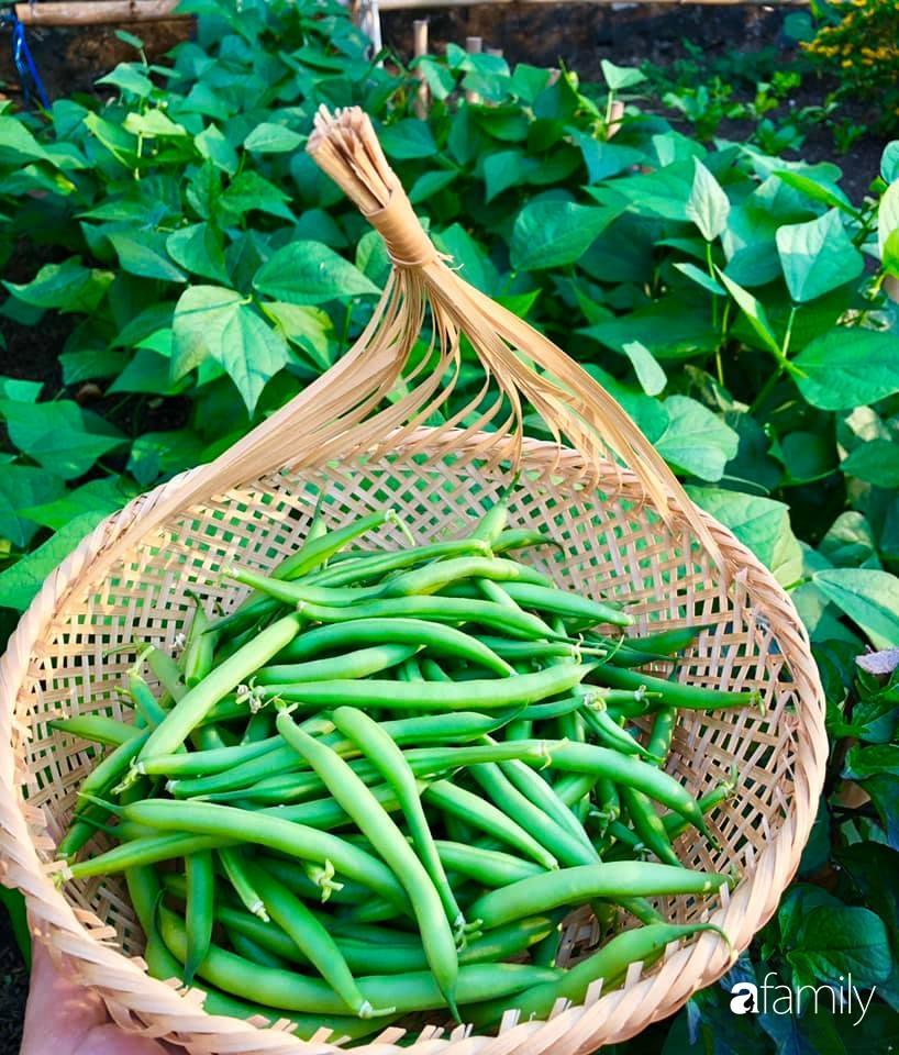 Bí quyết trộn đất giản đơn mà hiệu quả giúp khu vườn 70m² trồng cây gì cũng tốt tươi xanh mát của mẹ đảm ở Huế-8