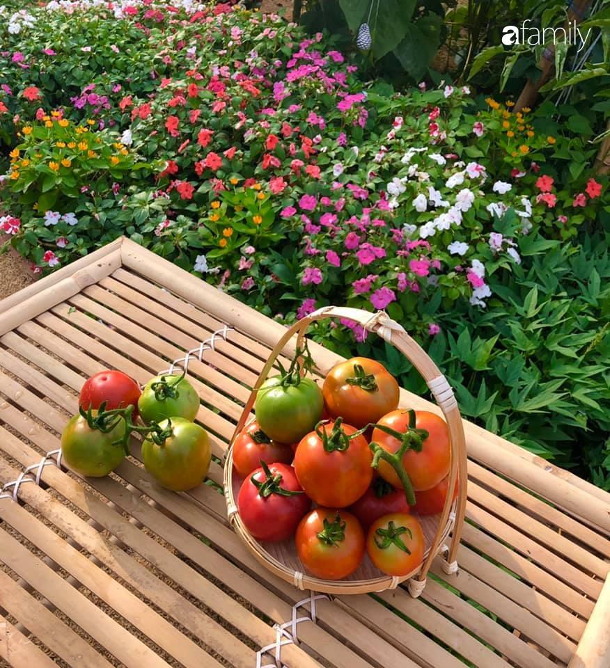 Bí quyết trộn đất giản đơn mà hiệu quả giúp khu vườn 70m² trồng cây gì cũng tốt tươi xanh mát của mẹ đảm ở Huế-14