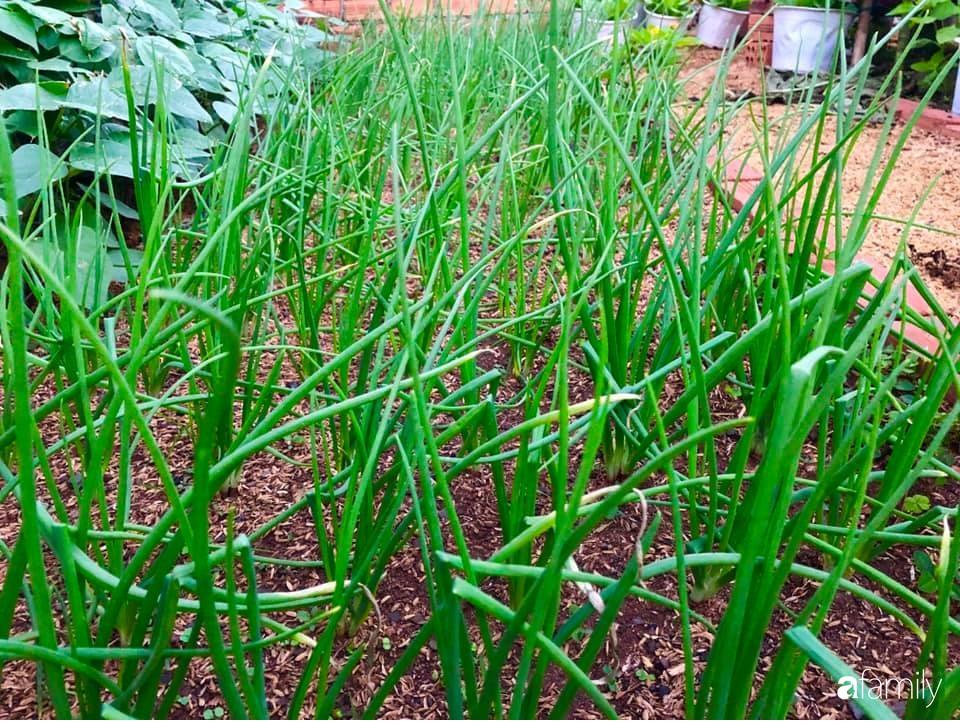 Bí quyết trộn đất giản đơn mà hiệu quả giúp khu vườn 70m² trồng cây gì cũng tốt tươi xanh mát của mẹ đảm ở Huế-15