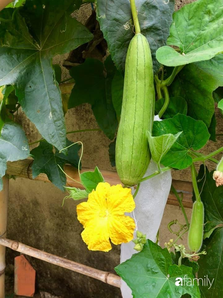 Bí quyết trộn đất giản đơn mà hiệu quả giúp khu vườn 70m² trồng cây gì cũng tốt tươi xanh mát của mẹ đảm ở Huế-21