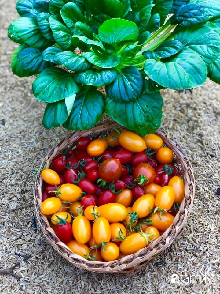 Bí quyết trộn đất giản đơn mà hiệu quả giúp khu vườn 70m² trồng cây gì cũng tốt tươi xanh mát của mẹ đảm ở Huế-24