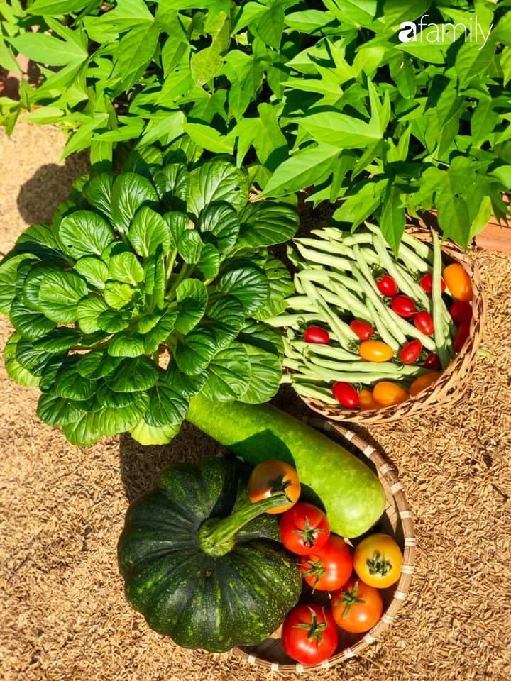 Bí quyết trộn đất giản đơn mà hiệu quả giúp khu vườn 70m² trồng cây gì cũng tốt tươi xanh mát của mẹ đảm ở Huế-26