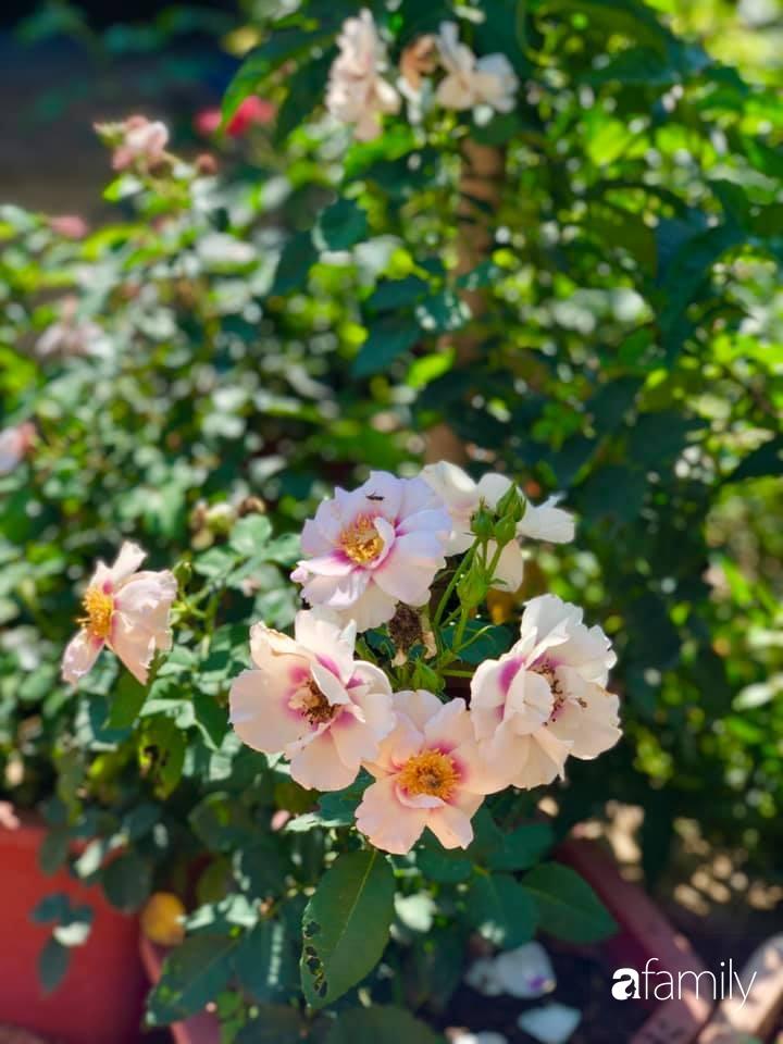 Bí quyết trộn đất giản đơn mà hiệu quả giúp khu vườn 70m² trồng cây gì cũng tốt tươi xanh mát của mẹ đảm ở Huế-29