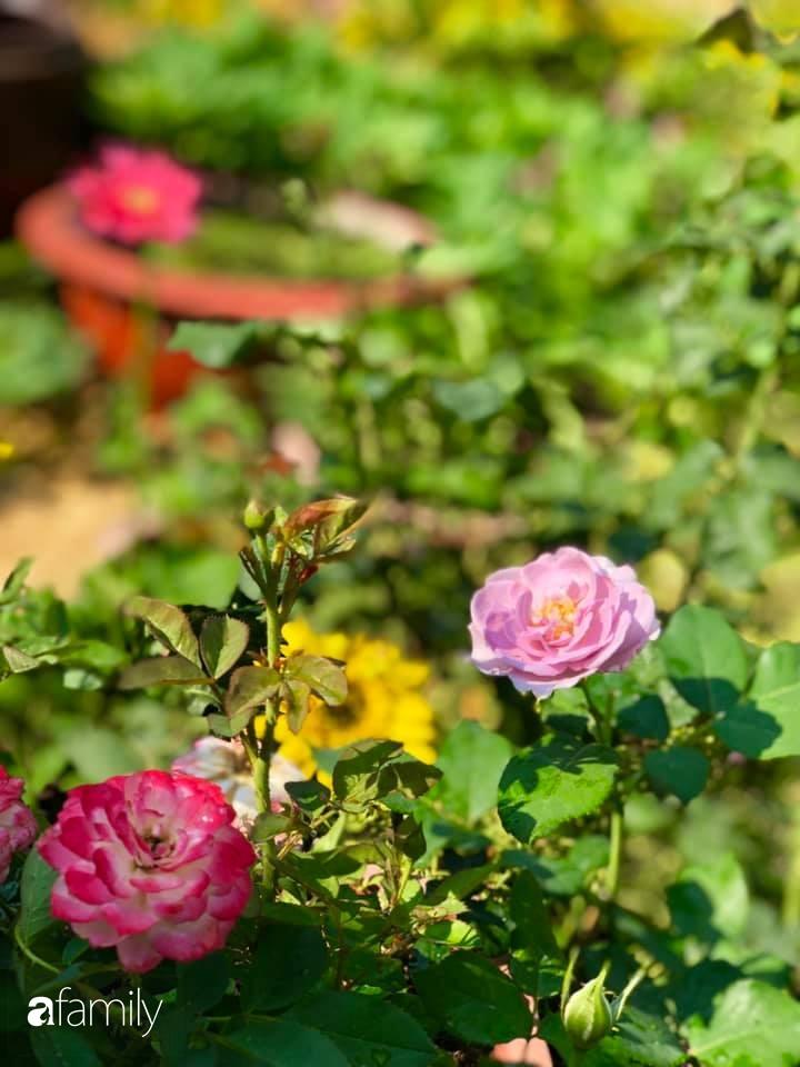 Bí quyết trộn đất giản đơn mà hiệu quả giúp khu vườn 70m² trồng cây gì cũng tốt tươi xanh mát của mẹ đảm ở Huế-33