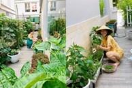 Khu vườn ngập tràn hoa và rau sạch của diễn viên Thân Thúy Hà