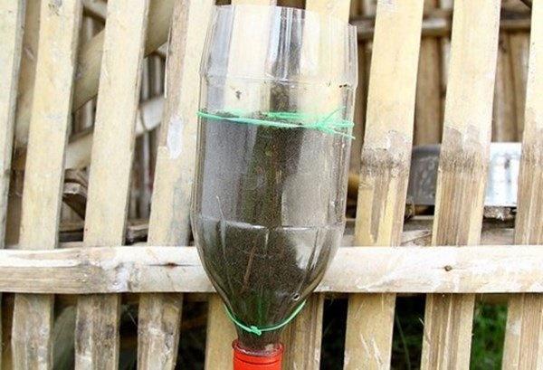 Nhặt lại chai nhựa làm chỗ trồng rau, vài tuần sau lớn nhanh như thổi ai cũng ngạc nhiên-4