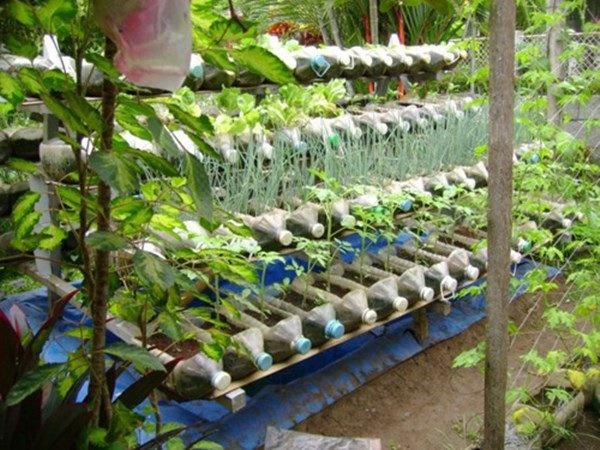 Nhặt lại chai nhựa làm chỗ trồng rau, vài tuần sau lớn nhanh như thổi ai cũng ngạc nhiên-8