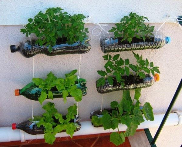 Nhặt lại chai nhựa làm chỗ trồng rau, vài tuần sau lớn nhanh như thổi ai cũng ngạc nhiên-9