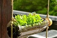 Nhặt lại chai nhựa làm chỗ trồng rau, vài tuần sau lớn nhanh như thổi ai cũng ngạc nhiên