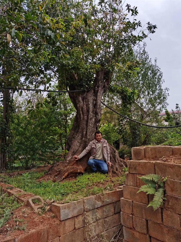 Trung Quốc chịu chi 12 tỷ mua cặp cây khủng, đại gia vẫn chưa chịu bán-5