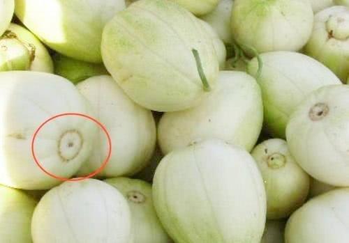 Khi mua dưa lê, nhìn vào rốn quả, thấy điều này chị em mua ngay kẻo hết-2