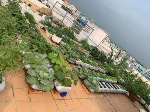 Tận dụng can nhựa mẹ đảm Cần Thơ biến sân thượng thành khu vườn xanh mát-2