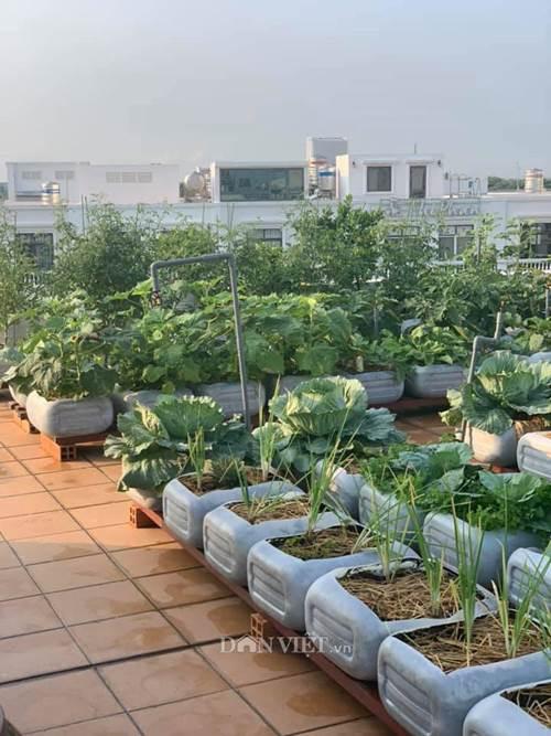 Tận dụng can nhựa mẹ đảm Cần Thơ biến sân thượng thành khu vườn xanh mát-3