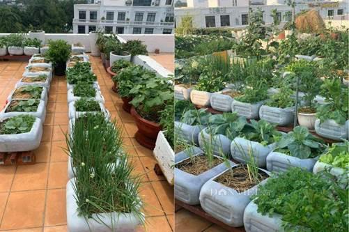 Tận dụng can nhựa mẹ đảm Cần Thơ biến sân thượng thành khu vườn xanh mát-5
