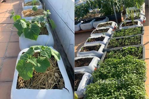 Tận dụng can nhựa mẹ đảm Cần Thơ biến sân thượng thành khu vườn xanh mát-6
