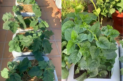 Tận dụng can nhựa mẹ đảm Cần Thơ biến sân thượng thành khu vườn xanh mát-7