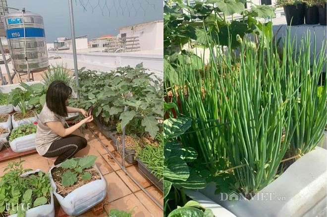 Tận dụng can nhựa mẹ đảm Cần Thơ biến sân thượng thành khu vườn xanh mát-12